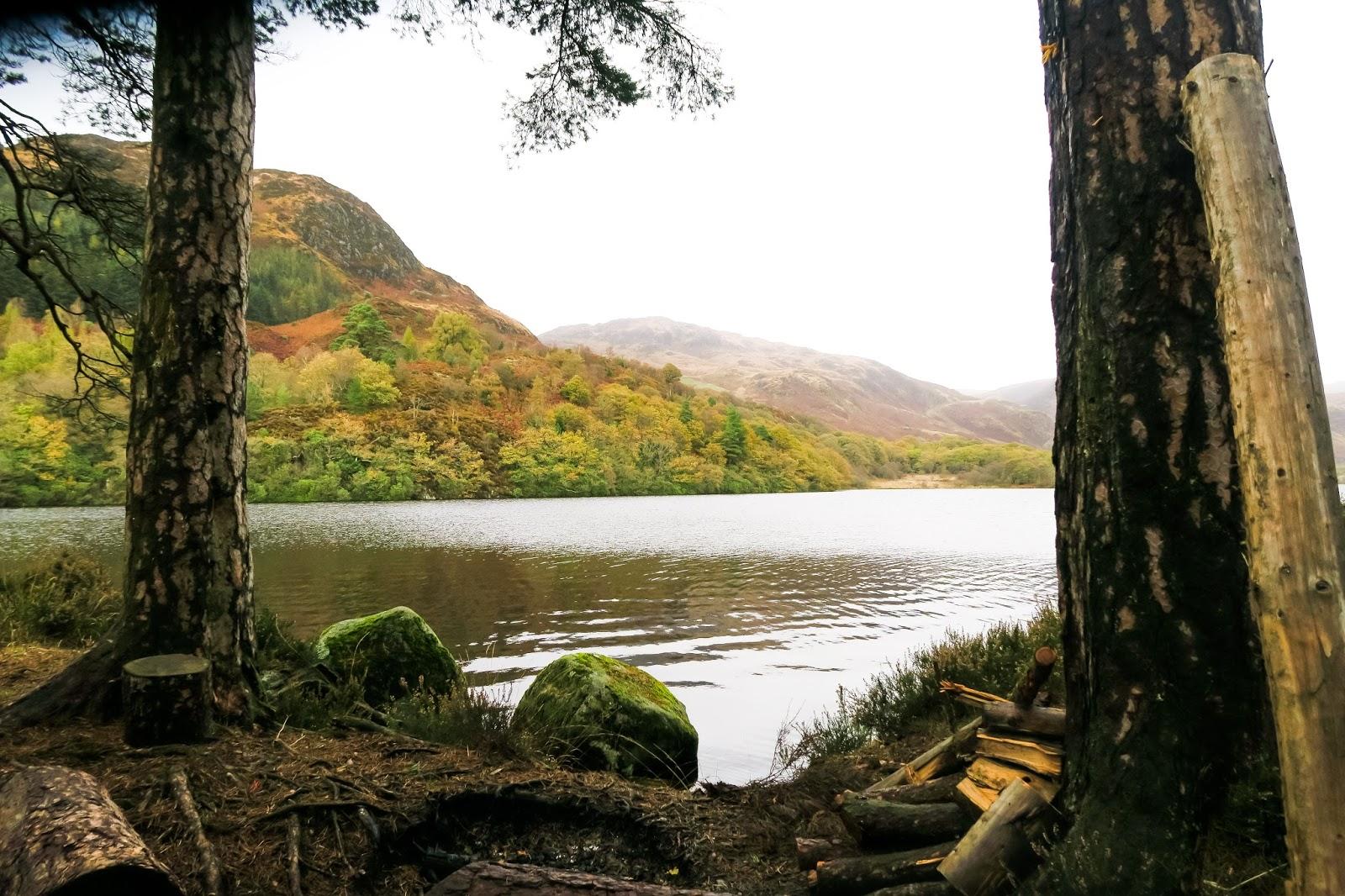 Wood walk galloway forest scotland liquid grain river liquidgrain