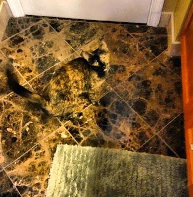 Gato camuflado con el piso