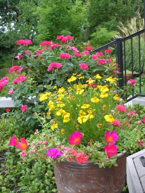 Simple Rose Garden: Signature Gardens: Container Crazy