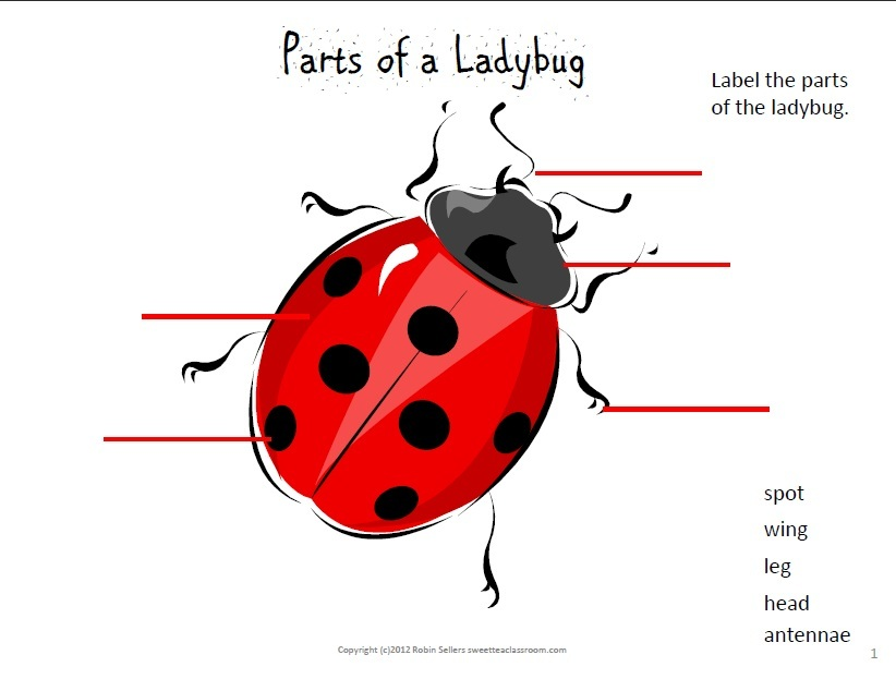 Sweet Tea Classroom Ladybugs In The Classroom