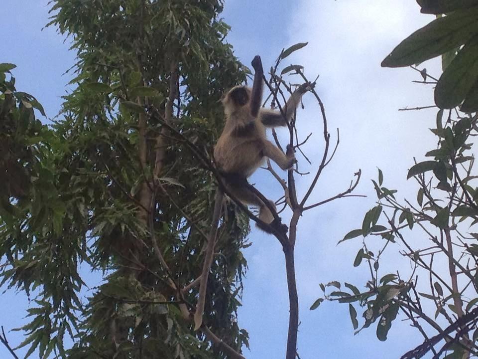 beautiful monkey image