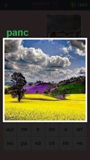 все поле засеяно желтым рапсом