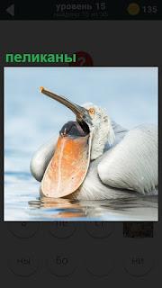 Около воды находится пеликан, который проглотил какую то пищу