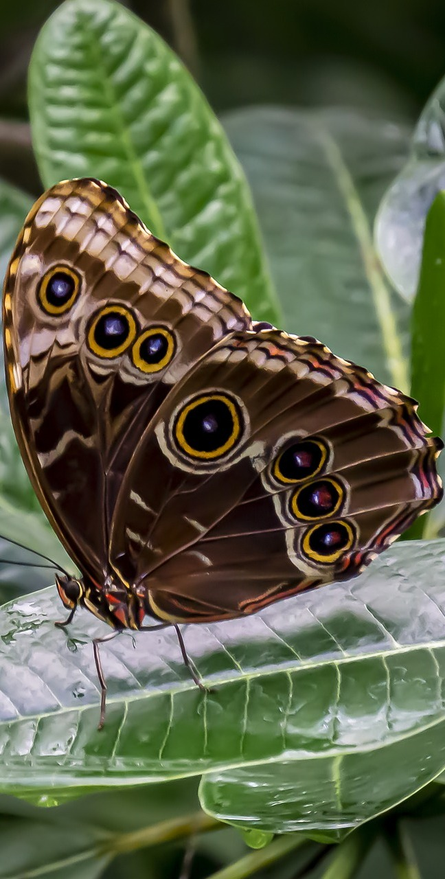 A butterfly on wet leaves.