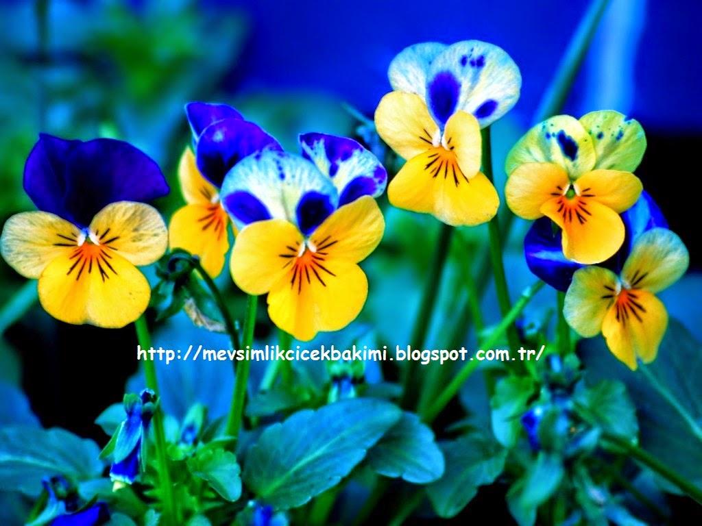 Aile Tanışma Çiçeği Seçiminde Püf Noktalar