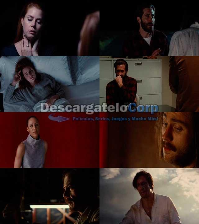 Animales Nocturnos (2016) DVDRip Español Latino