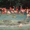 Jurong Bird Park adalah wisata Singapore yang menjadi taman burung terbesar di dunia.