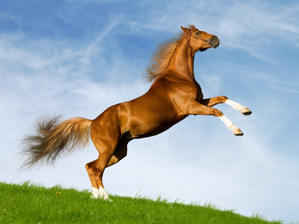 Beautiful Horses Wallpapers - Entertainment Only