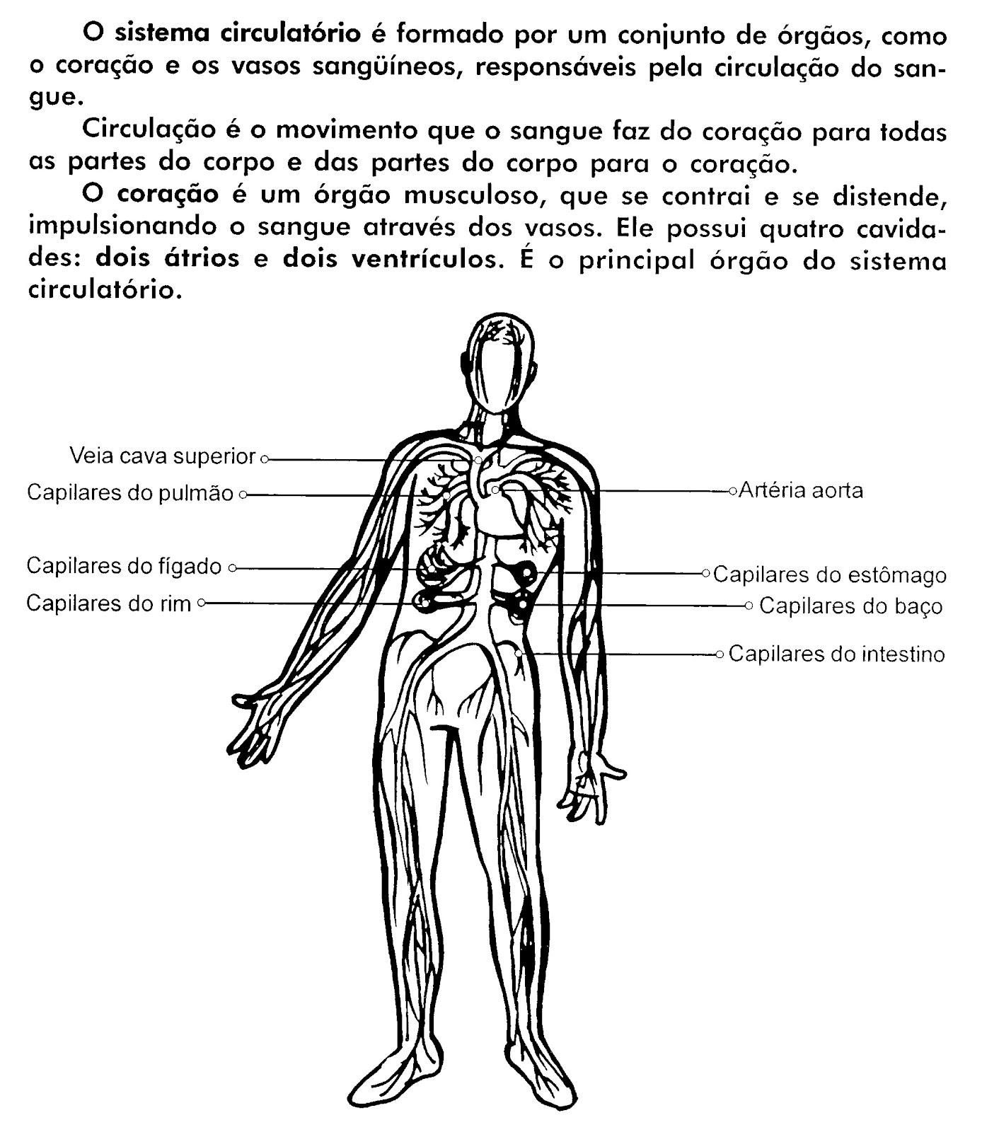 Desenho Do Sistema Cardiovascular