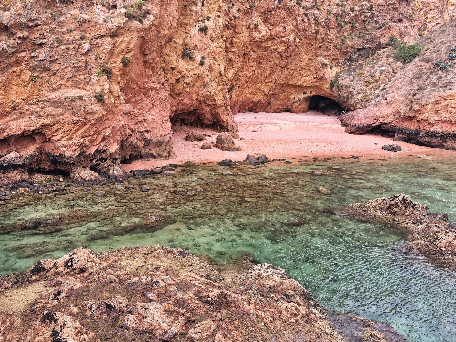 Berlengas islands, Portugal, ejnets