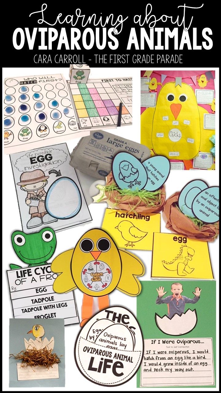 Let\'s Talk About Oviparous Animals - The First Grade Parade