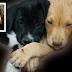 Δευτέρα 4 Απριλίου: Ημέρα αφιερωμένη, από τον δήμο Αθηναίων, στη φροντίδα των αδέσποτων ζώων!