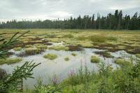 Alaskan wetlands (Credit: S Hillebrand/USFWS) Click to Enlarge.