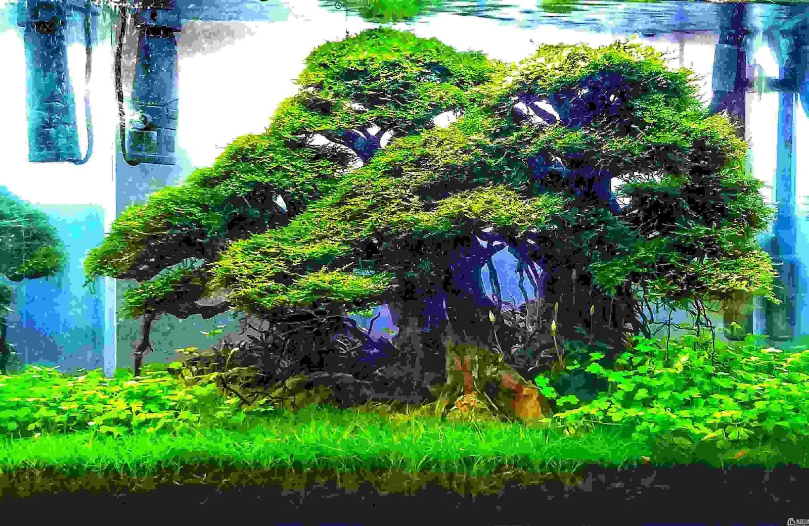 6 Manfaat besar memiliki akuarium di dalam rumah