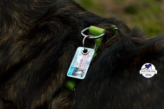 safepet, adresówka dla psa, identyfikator dla psa, adres psa, jak oznakować psa, pies, czworonóg, zaginiony pies, welsh corgi, welsh corgi cardigan, corgi, z psem w podróżym podróże z psem, wakacje z psem, z psem na wakacje