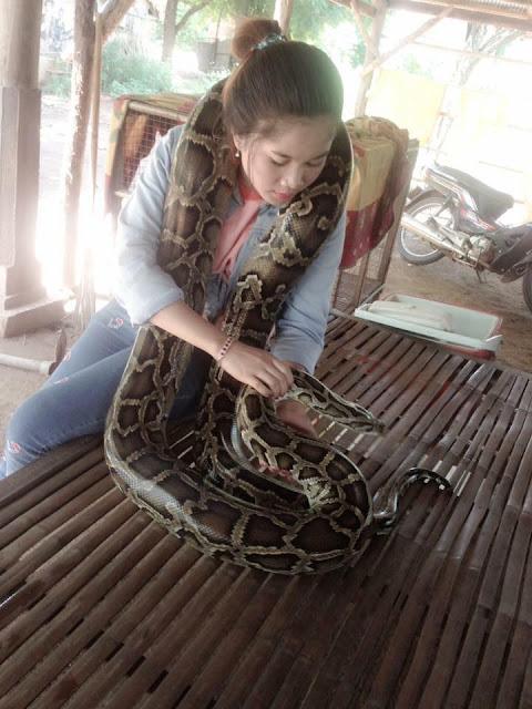 La Belle et le Python