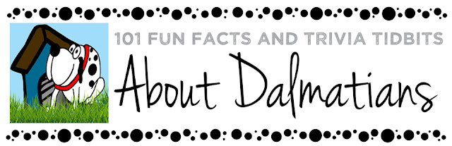 101 Fun Facts and Trivia Tidbits About Dalmatians