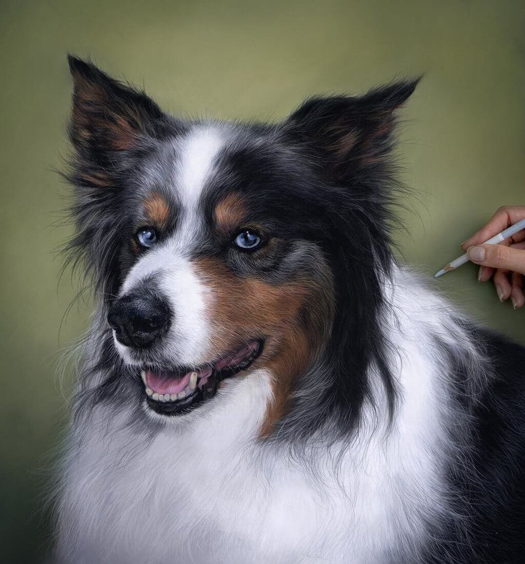 04-Cooper-the-Australian-Shepherd-Patricia-Otero-Cats-and-Dogs-Portrait-Artist-www-designstack-co