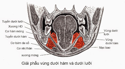 khoang liên kết vùng dưới hàm