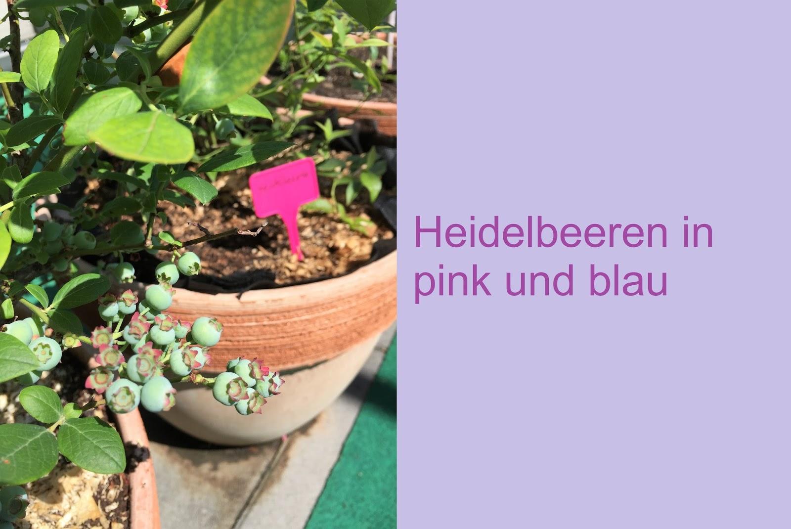 edgarten beerentr ume in pink und blau. Black Bedroom Furniture Sets. Home Design Ideas
