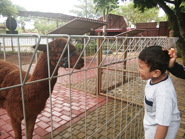 Taman Legenda TMII, pojok edukasi unta mini