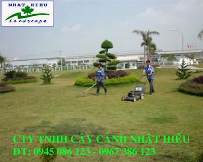 Dịch vụ cắt cỏ tại Hà Nội