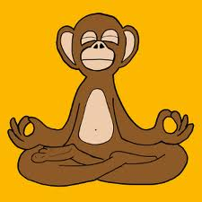 monkey doing meditation