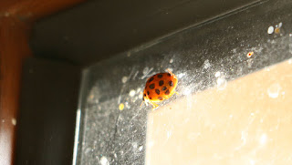 A ladybird in the roof