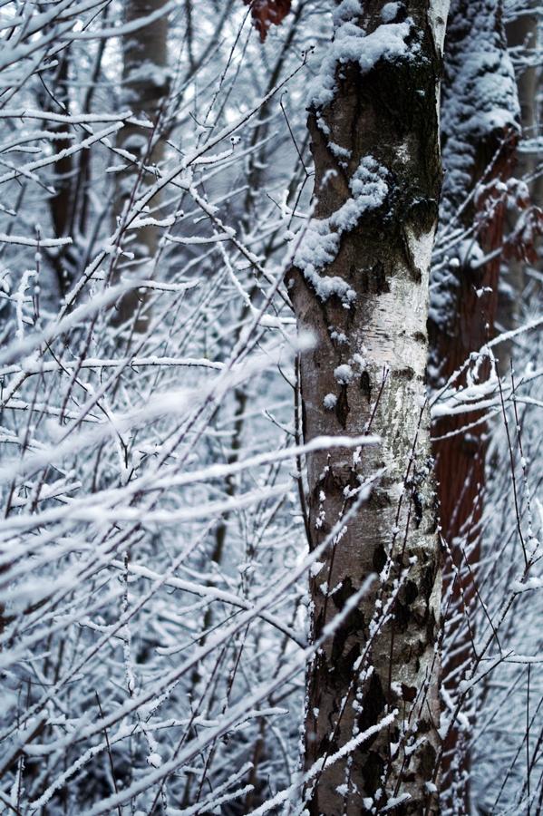 Blog + Fotografie by it's me! - Winter für einen Tag - verschneiter Baumstamm und verschneite Zweige