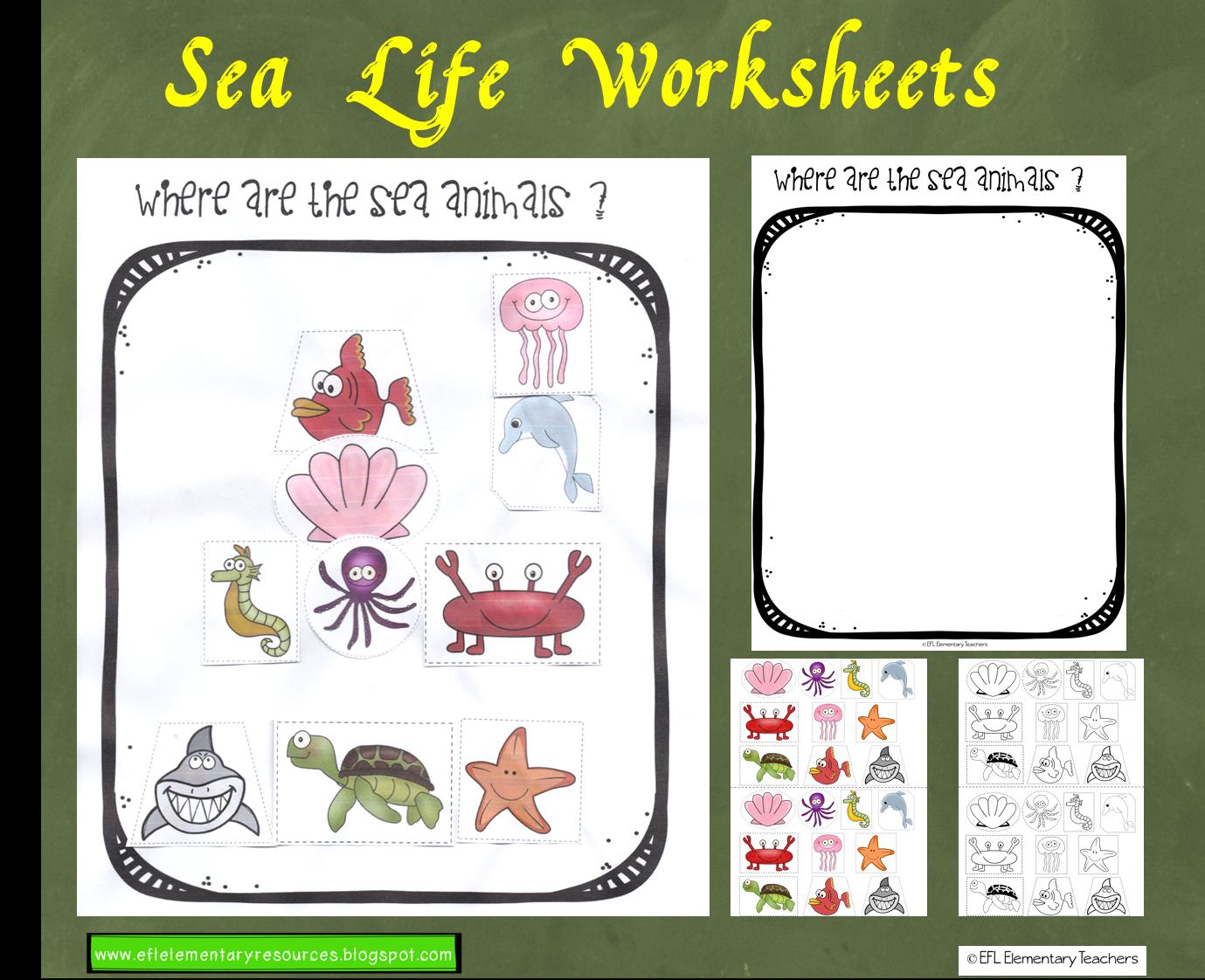 Efl Elementary Teachers Sea Ocean Or Underwater Animals