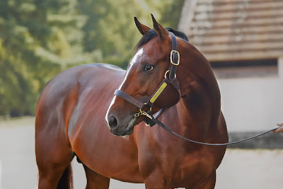 Karakontie First Season Sire (2019)