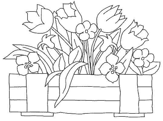 Atividades Para Baixar 300 Riscos E Desenhos De Flores Para