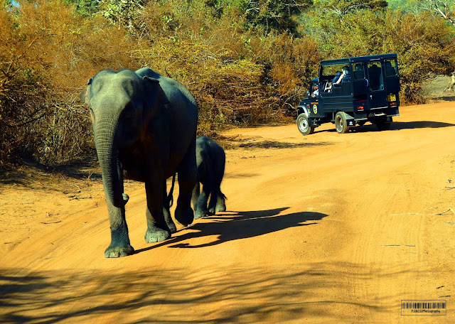 Yala National Park Price