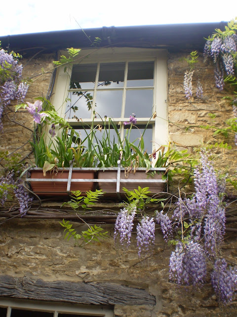 A Cotswold 'Chocolate Box' House's window with plants