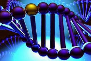 susunan genetik