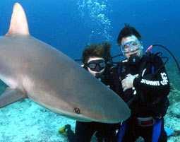 viaggi e avventure nel mondo: andiamo a nuotare con gli squali