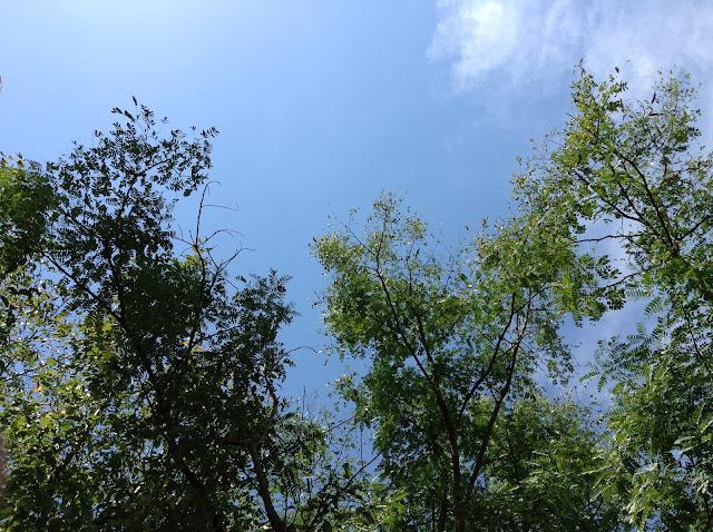 イメージ画像:木と空
