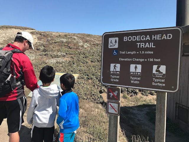 Bodega Head Trail sign