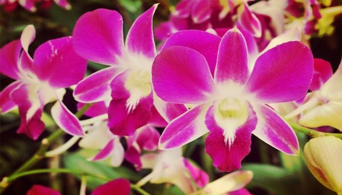 Orquídeas significado
