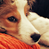 TÉMA: Jak si lidé vybírají štěně?
