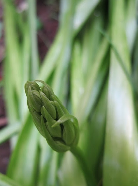 mijn 30 mooiste tuinfoto's van april 2011!