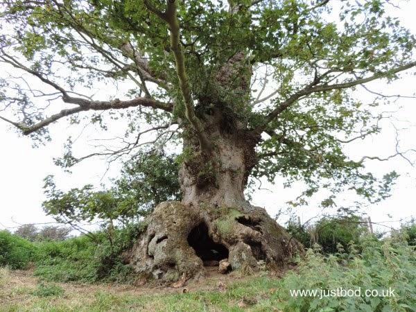 Wonderland Tree