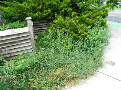 By Paul Jung Gardening Services--a Toronto Gardening Company Leslieville Front Garden Cleanup Before