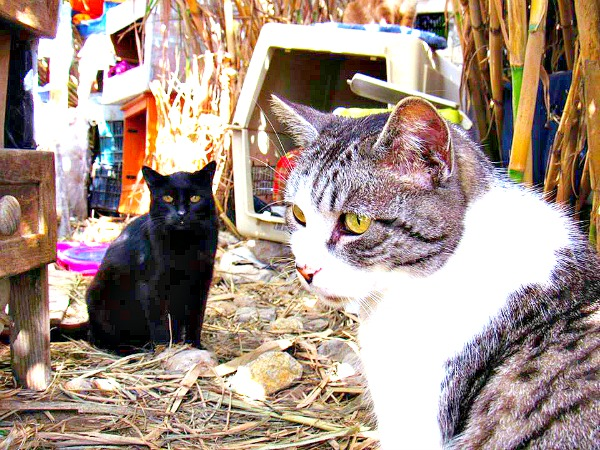 beach cats conil de la frontera spain