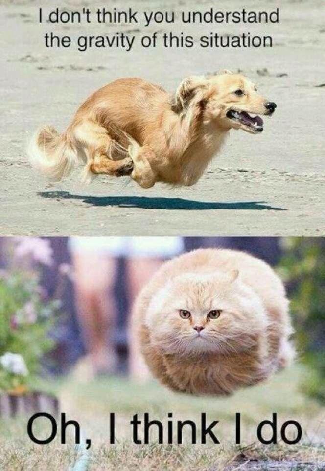 funny dog cat memes