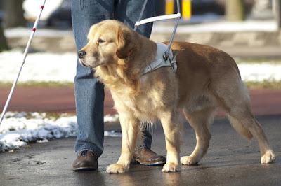 Bài học nhìn người từ câu chuyện con chó dẫn đường và người chủ mù lòa