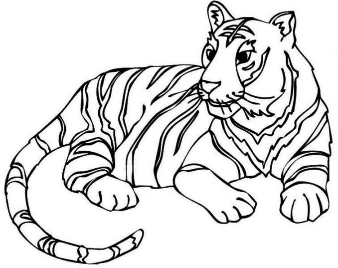 Berikut Gambar Sketsa Hitam Putih Mewarnai Harimau Terbaru