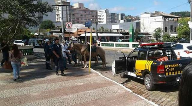 Fiscalização foi feita por setor de zoonoses e de trânsito em São Lourenço (MG) (Foto: Divulgação/Prefeitura de São Lourenço)