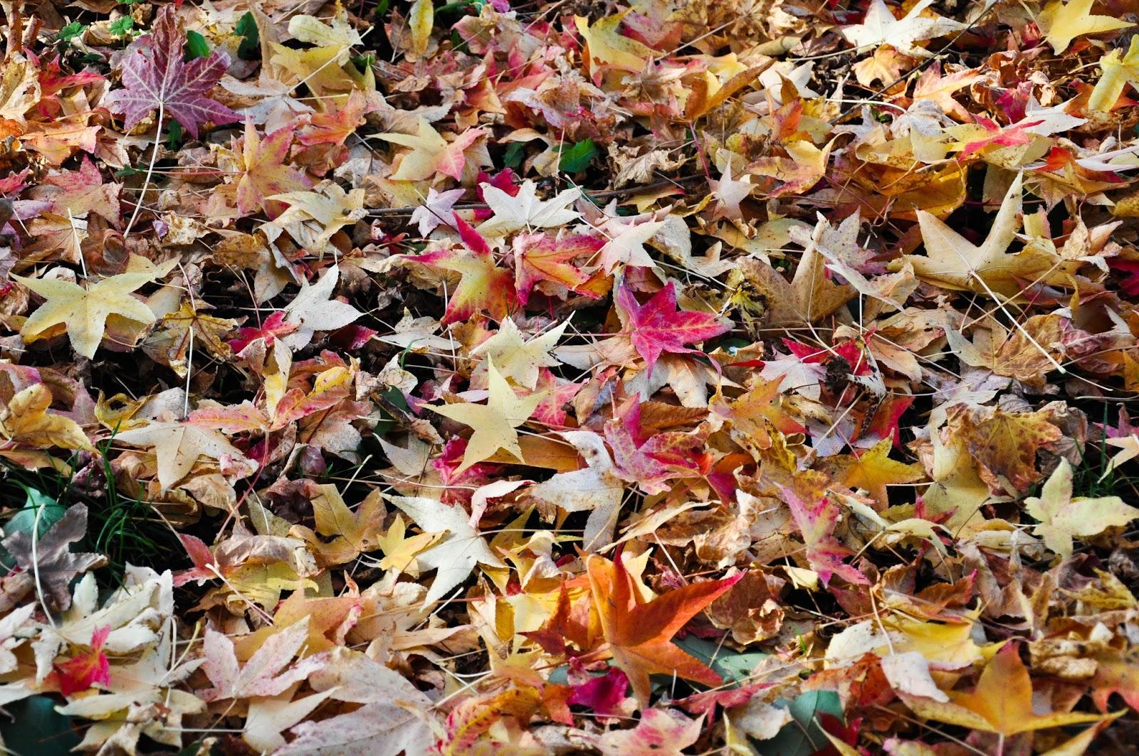 Fallen leaves, Agriturismo La Borina, Veneto, Italy