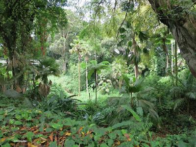 Wahiawa Botanical Garden scene